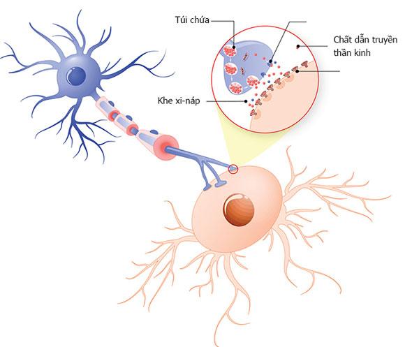 Suy giảm các chất dẫn truyền thần kinh 1