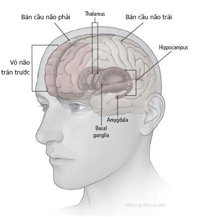 Sự phát triển và kết nối của tế bào thần kinh bị chậm 1