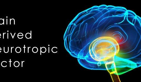Một số lý thuyết giải thích cơ chế nguyên nhân bệnh trầm cảm