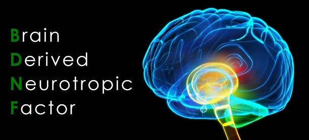 Một số lý thuyết giải thích cơ chế nguyên nhân bệnh trầm cảm 1