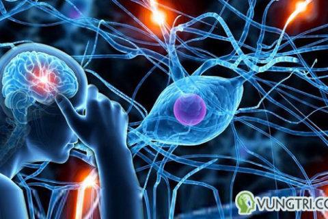 Sự giống và khác nhau giữa rối loạn lo âu và rối loạn thần kinh thực vật